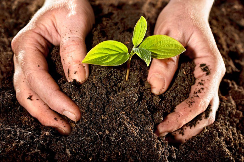 Где посадить гортензию на участке: выбор места, требования к грунту