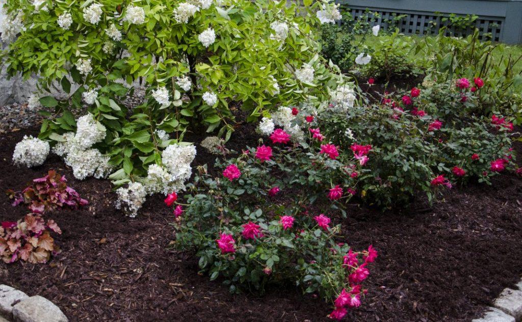 Гортензия в ландшафтном дизайне: как красиво посадить на участке