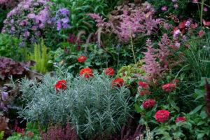 astilba beautiful garden flowers