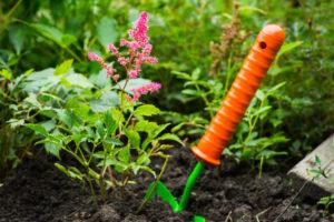 Астильба — посадка и уход в открытом грунте, специфика выращивания