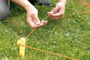Живая изгородь из спиреи японской, других видов: выращивание и уход