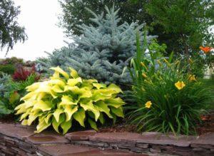Цветок хоста — уход и выращивание в саду, на дачном участке