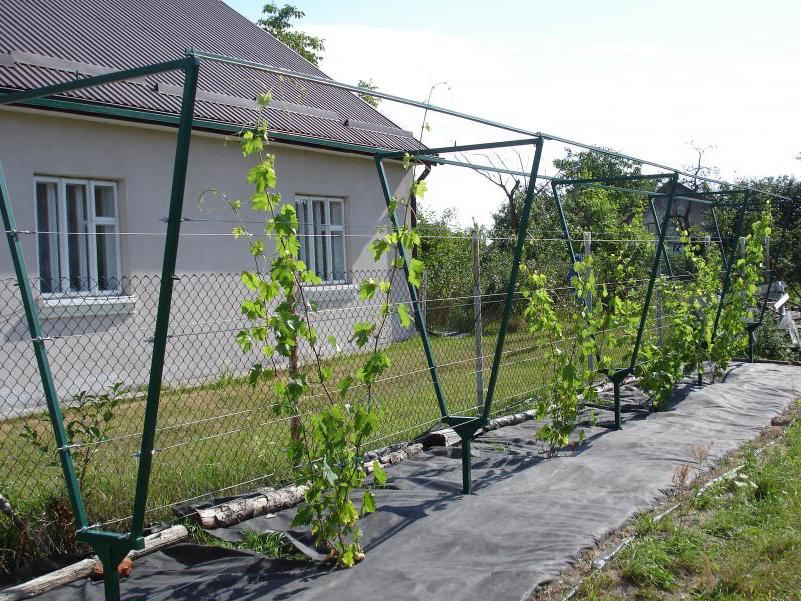 Шпалера для винограда своими руками: чертежи, порядок изготовления