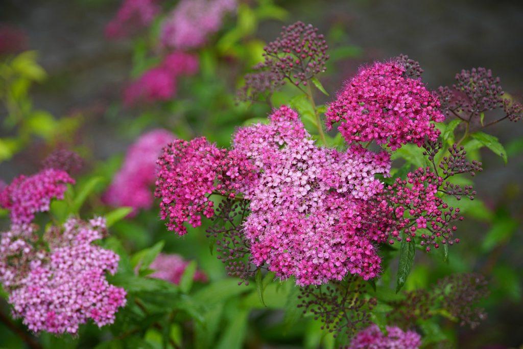 Вьющиеся растения для забора: быстрорастущие, многолетние, зимостойкие