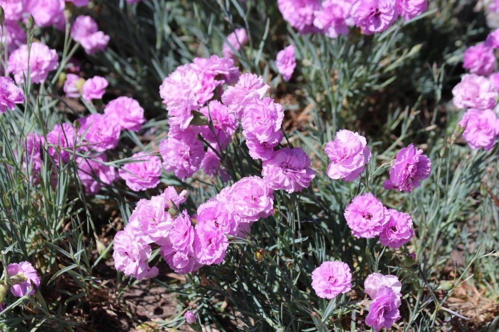 myfoto-bordur-iz-cvetov-vdol-dorozhki