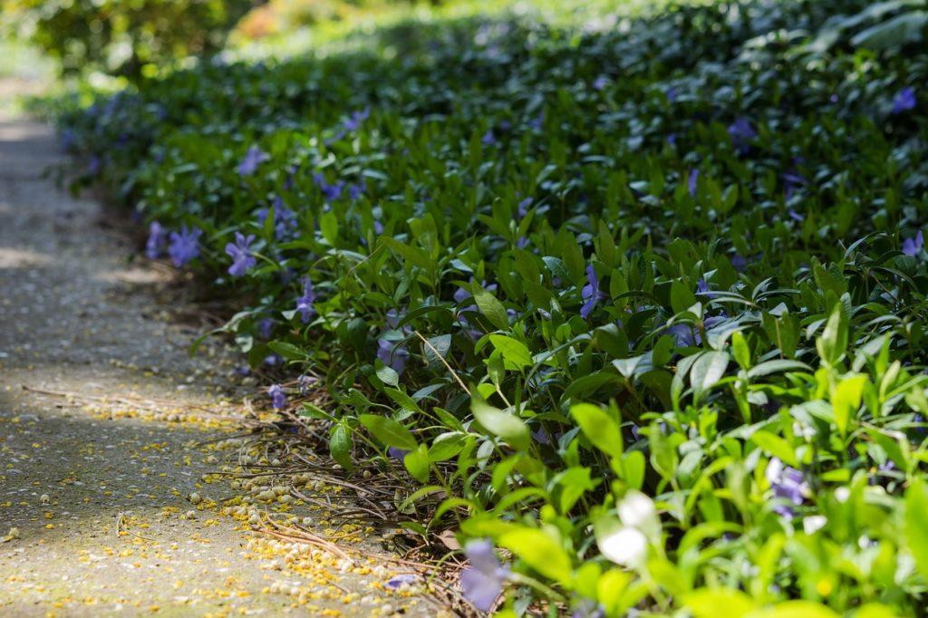 myfoto-bordurnie-cveti-mnogoletnie-nizkoroslie-cvetuzhie-vse