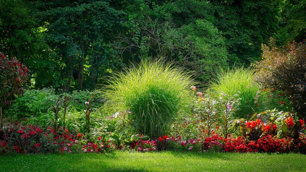 Бордюрные цветы и трава: какие растения выбрать для оформления на даче