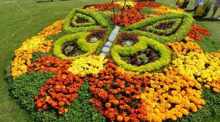 Как красиво посадить бархатцы на клумбе: лучшие сочетания цветов