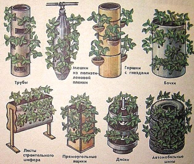 Вертикальная клумба для петунии — пошаговая инструкция по изготовлению