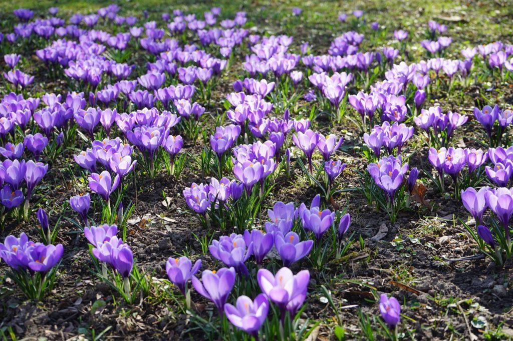 myfoto-kakie-cveti-mozhno-posadit-v-klumbu