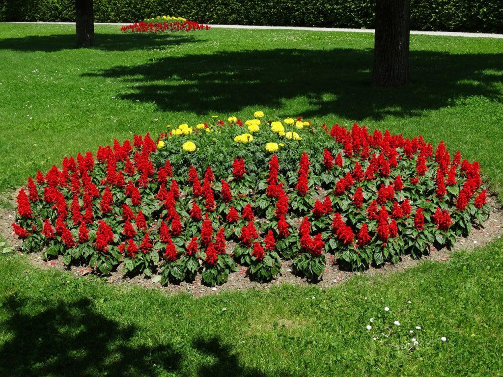 Цветы для клумбы, цветущие всё лето: подбор растений для дачного цветника