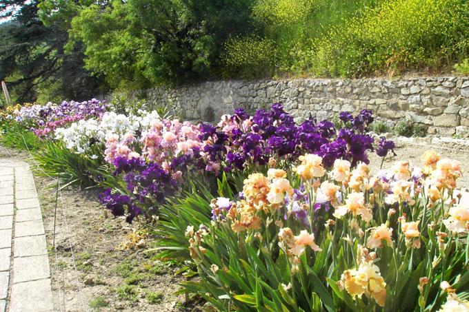 Как используют ирисы в ландшафтном дизайне садового участка