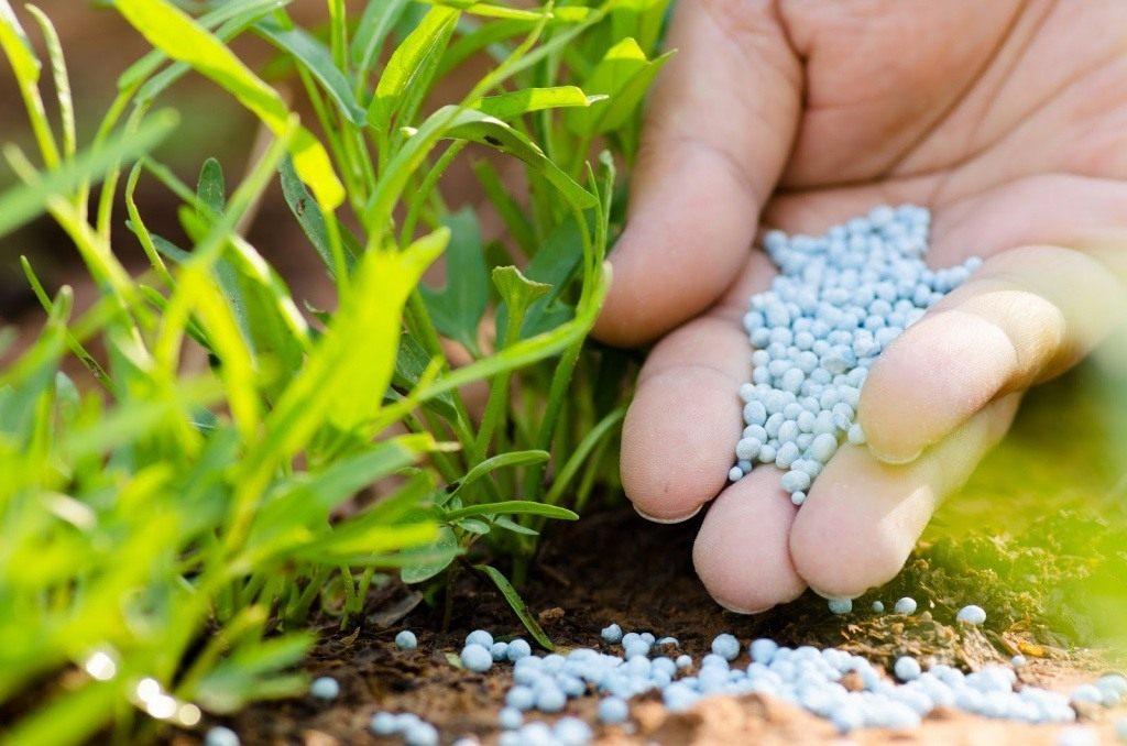 Удобрение для цветов в саду — виды подкормок для улучшения цветения