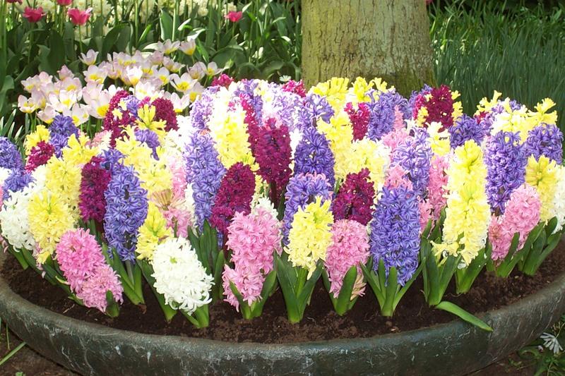 Весенние цветы садовые — разновидности, названия и характеристики