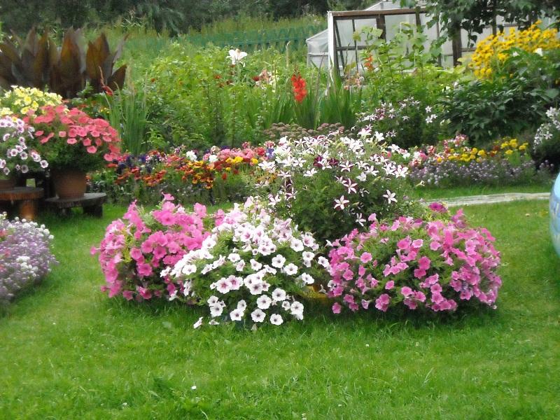 Какие однолетние цветы можно посадить на даче — виды, характеристики