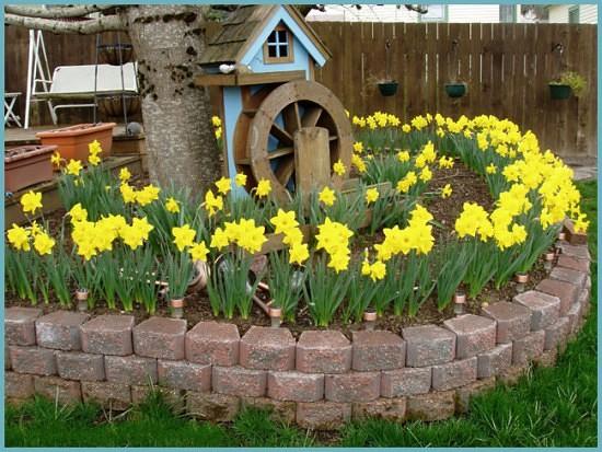 Нарцисс цветок — описание и особенности выращивания растения в саду