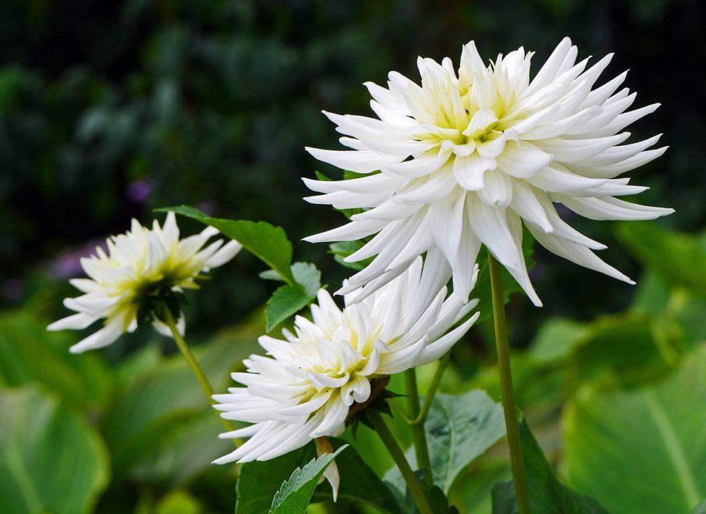 Лучшие луковичные цветы для сада — названия и описания, правила выбора