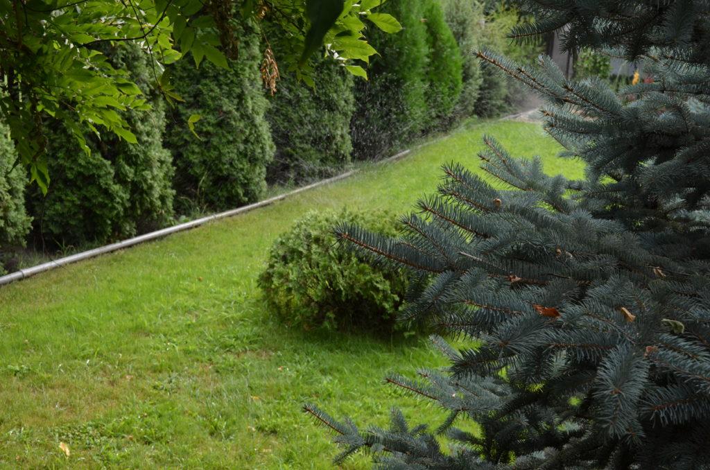 Как оформить красивый газон перед домом своими руками — руководство
