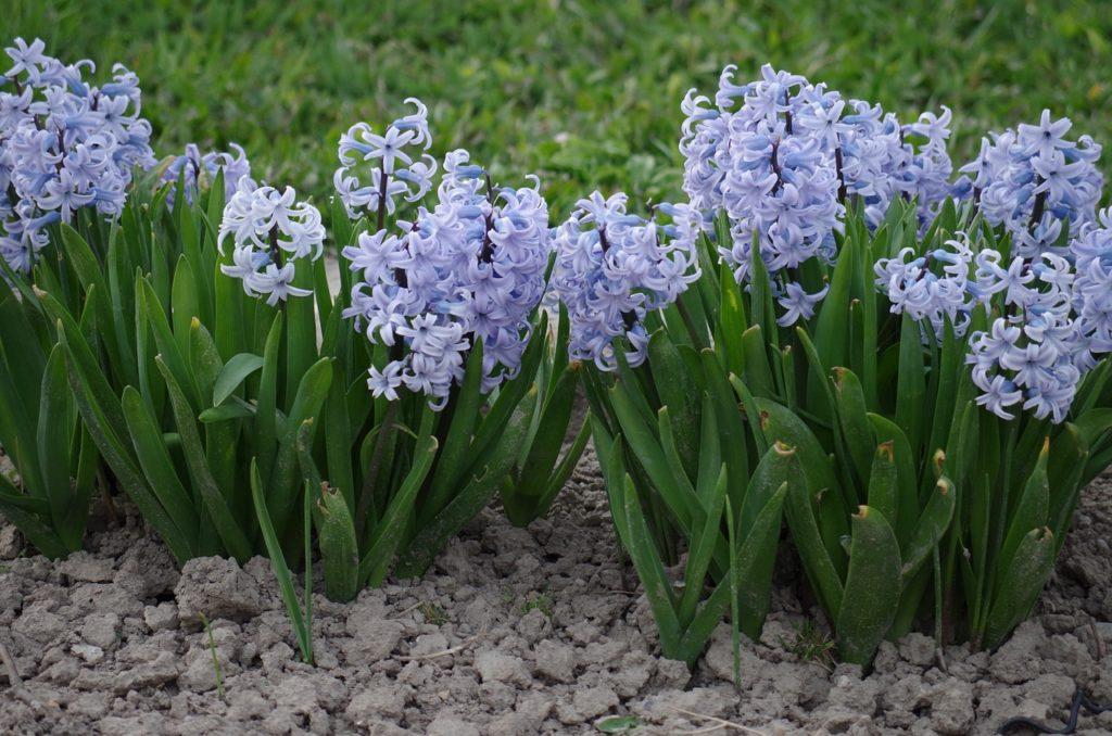 myfoto-kakie-cveti-pervimi-zacvetayut-na-priusadebnom-uchastke
