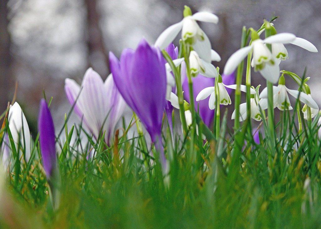 myfoto-pervie-vesennie-cveti-v-sadu