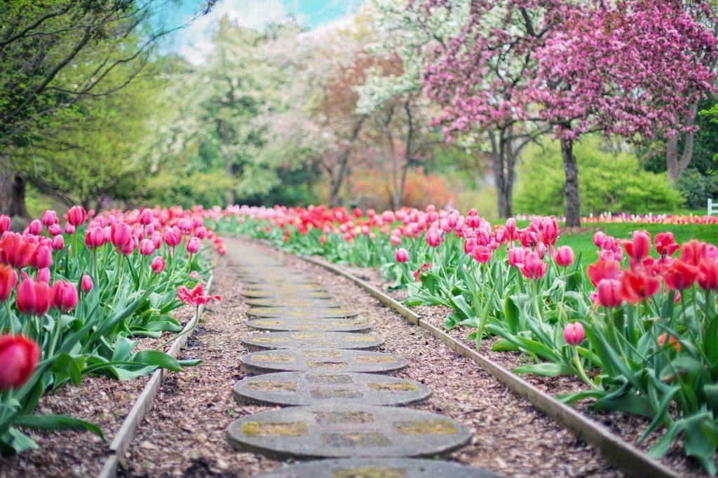 myfoto-rannie-dachnie-cveti