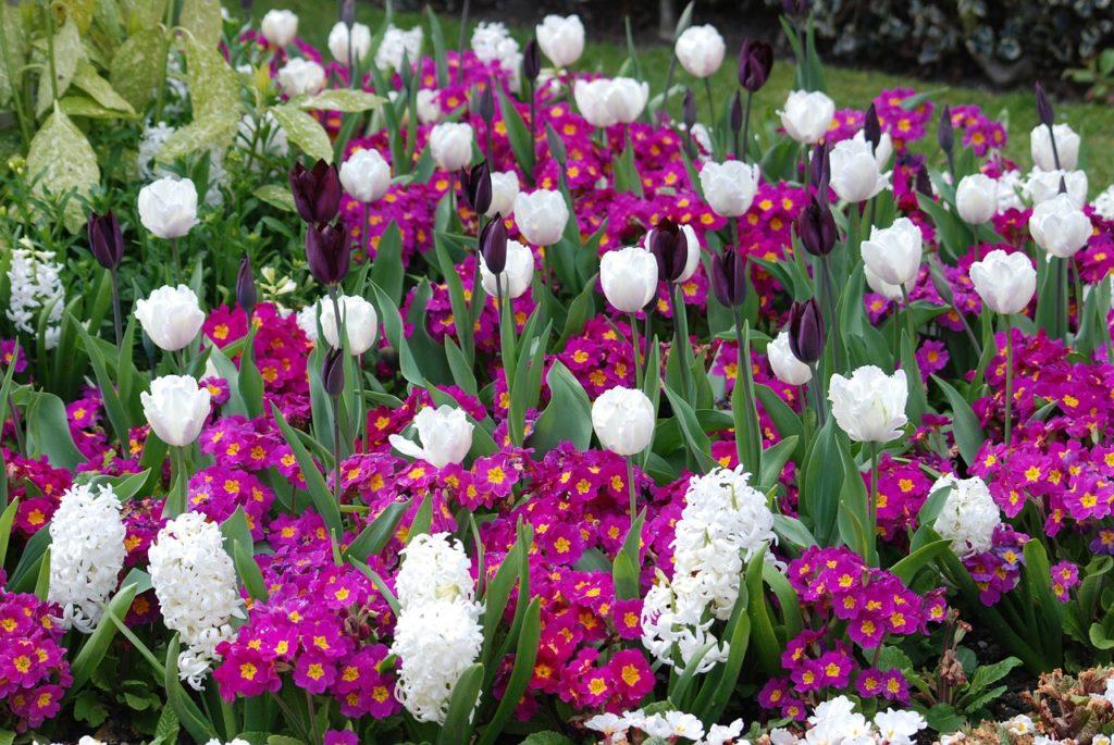 myfoto-samie-rannie-cveti-vesnoy-na-dache
