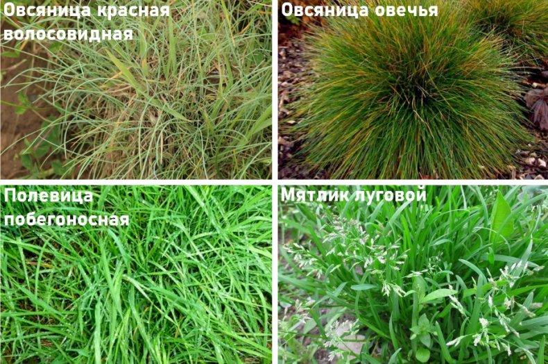 Как посадить на даче газон, который не надо стричь