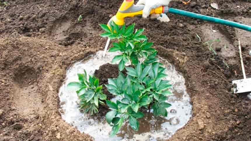 Чем подкормить цветы весной на даче — удобрения для цветущих растений