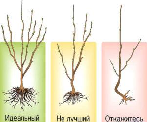 Какие плодовые деревья посадить на участке — виды и характеристики