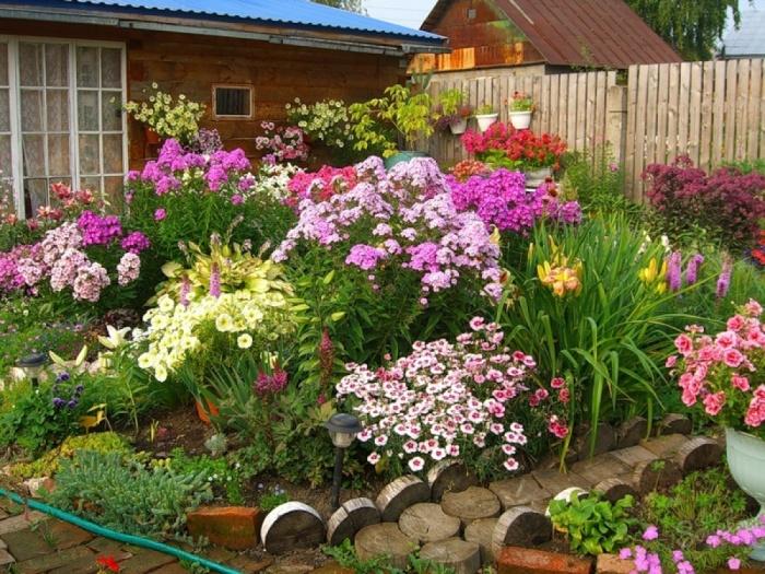 Многолетние цветы для дачи — названия и описания, особенности выбора