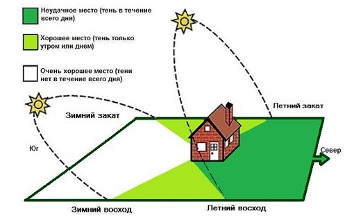 Каким должно быть расстояние между плодовыми деревьями на даче