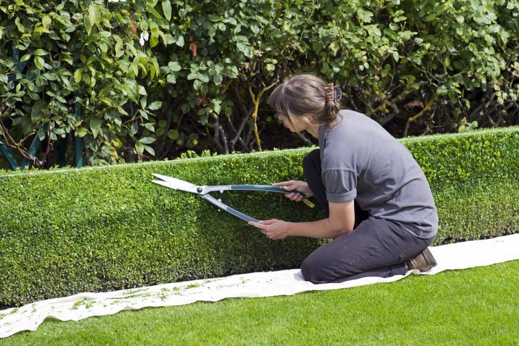 Стрижка кустов и деревьев на даче — основные правила и красивые формы