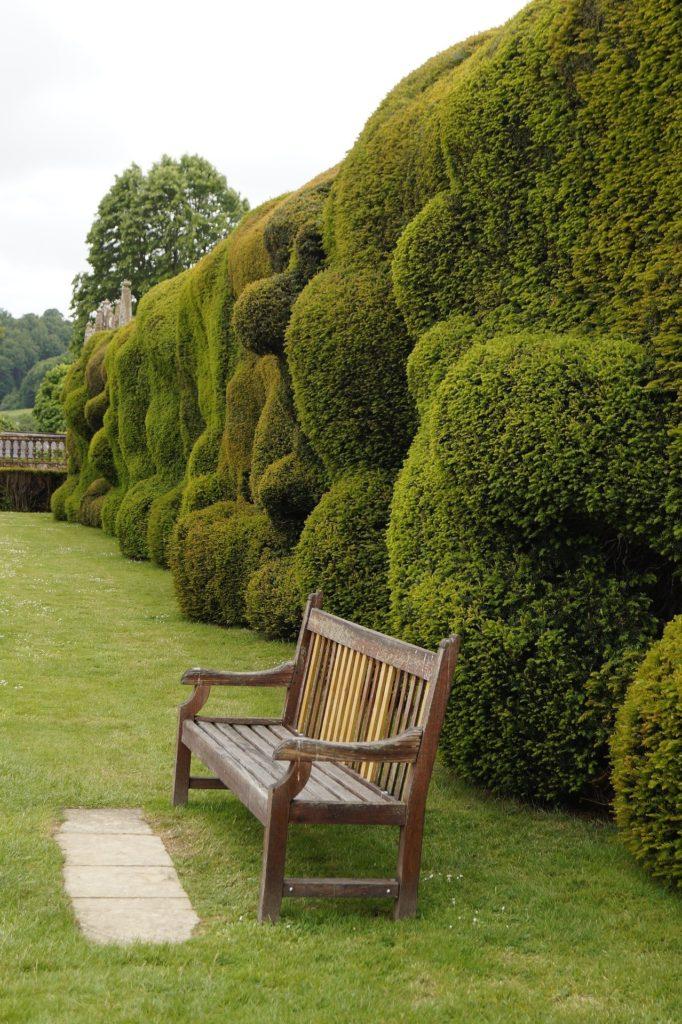 Туя западная — уход и выращивание дерева в саду