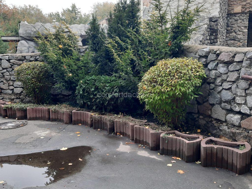 Какие карликовые деревья можно посадить на даче — виды, особенности