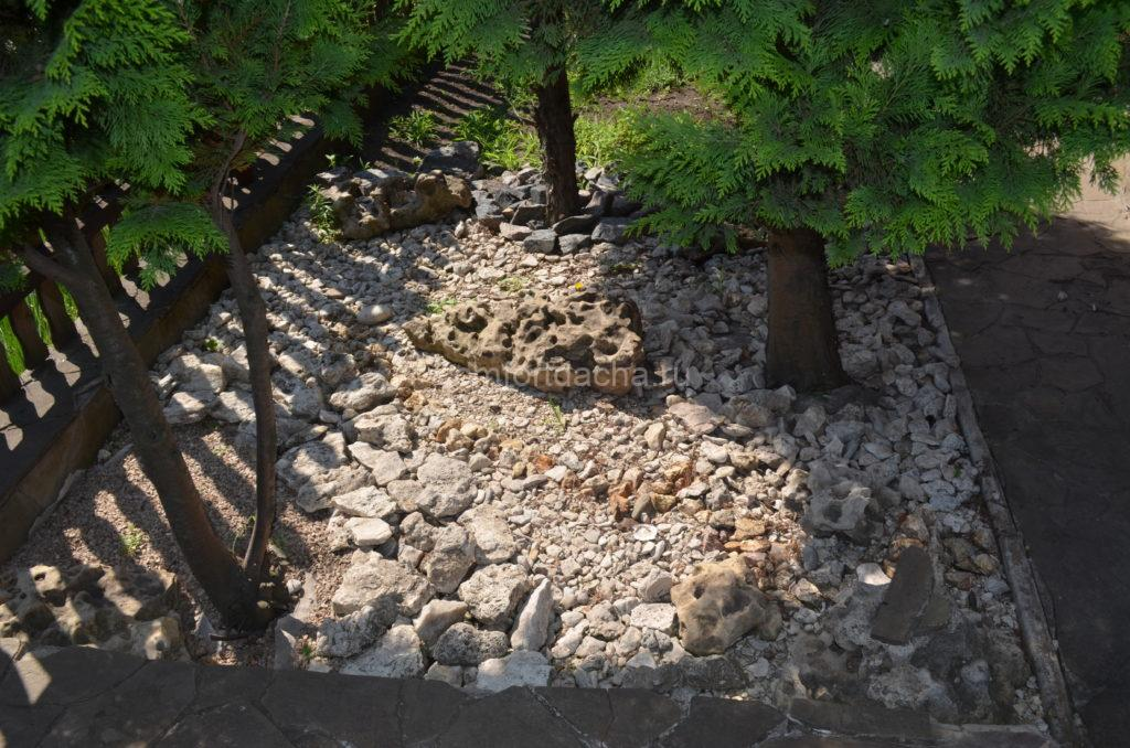 Как использовать туи в ландшафтном дизайне дачного участка — нюансы