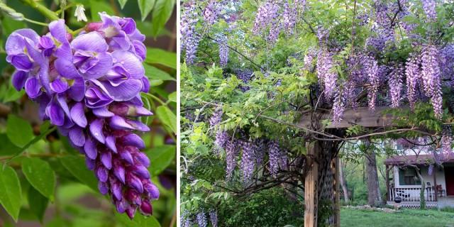 Кустарники, цветущие все лето, зимостойкие, многолетние — особенности