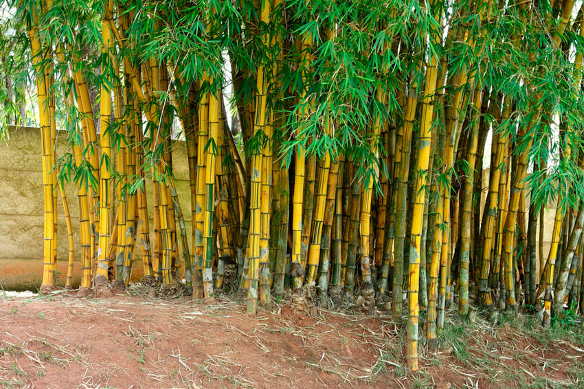 Деревья на участке загородного дома — плодовые, декоративные, хвойные