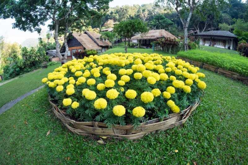 Красивое оформление клумб и цветников — как посадить цветы на даче