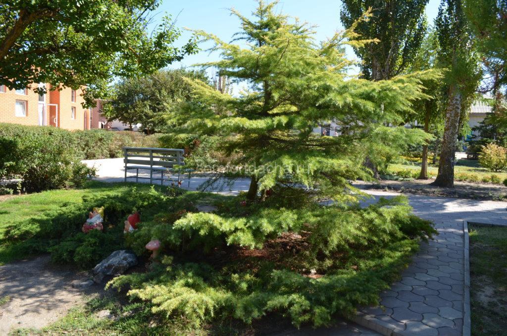 Как посадить на участке елку — где лучше ее высаживать в саду
