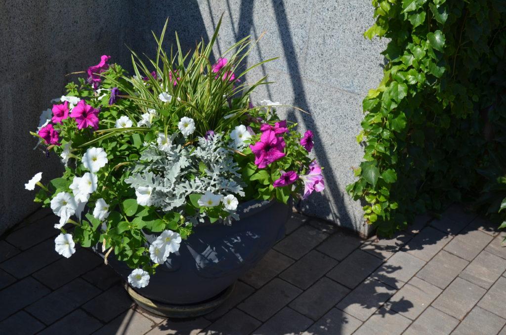 Клумба из однолетников — как сделать красивый цветник для дачи