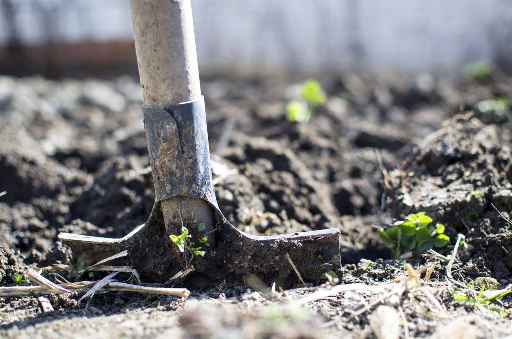 Гиацинт — уход после цветения в открытом грунте в саду