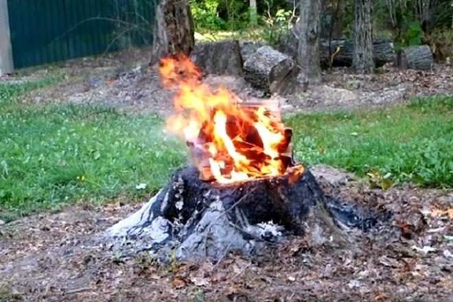 Как избавиться от пеньков деревьев без корчевания