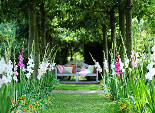 Как красиво посадить гладиолусы на дачном участке — подходящие соседи