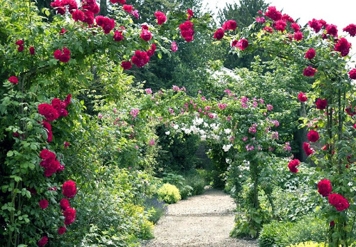 Как расположить плетистые розы в ландшафтном дизайне дачного участка
