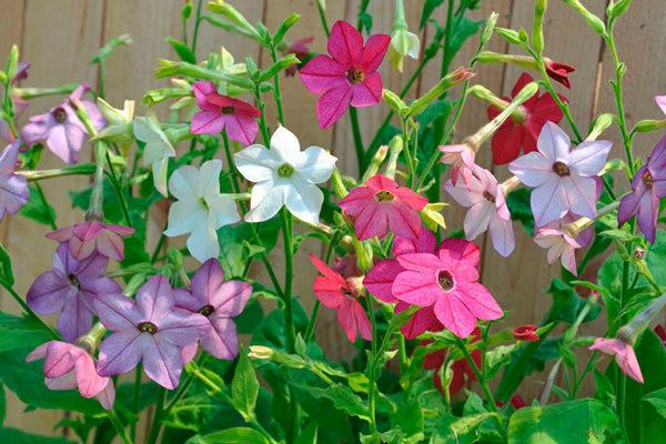 Ароматные цветы для сада — как выбрать растения с сильным запахом