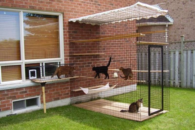 Вольер для кошек на даче своими руками — особенности конструкции