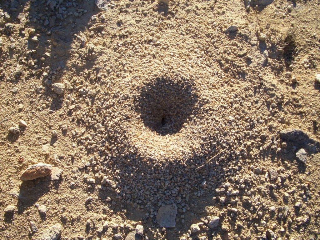Борьба с муравьями на садовом участке — эффективные средства