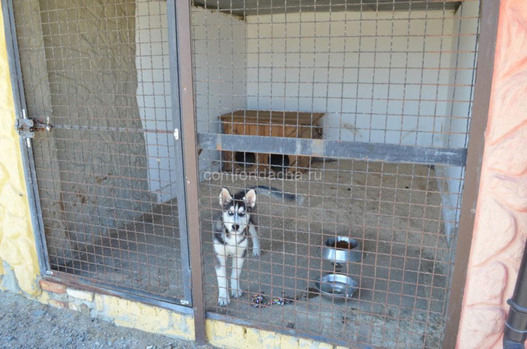 Вольер для собаки во дворе частного дома