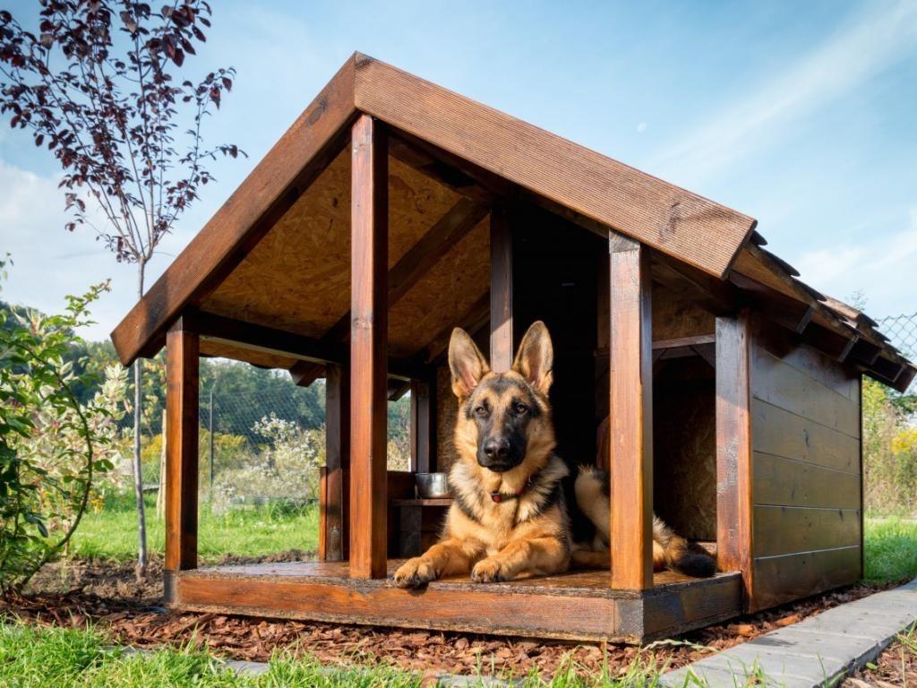 Будка для собаки на даче из подручных материалов