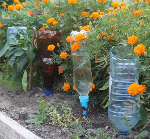 Капельный полив из пластиковых бутылок на даче своими руками